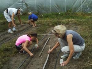 albino family planting radishes