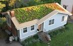 OliveStreet Green Roof